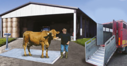 Bilancia da interro bestiame